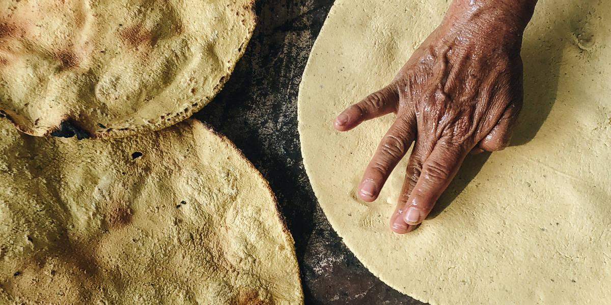 tortilla-mexicana-ong-maiz-nativo-transgenico-defensa-firma-peticion