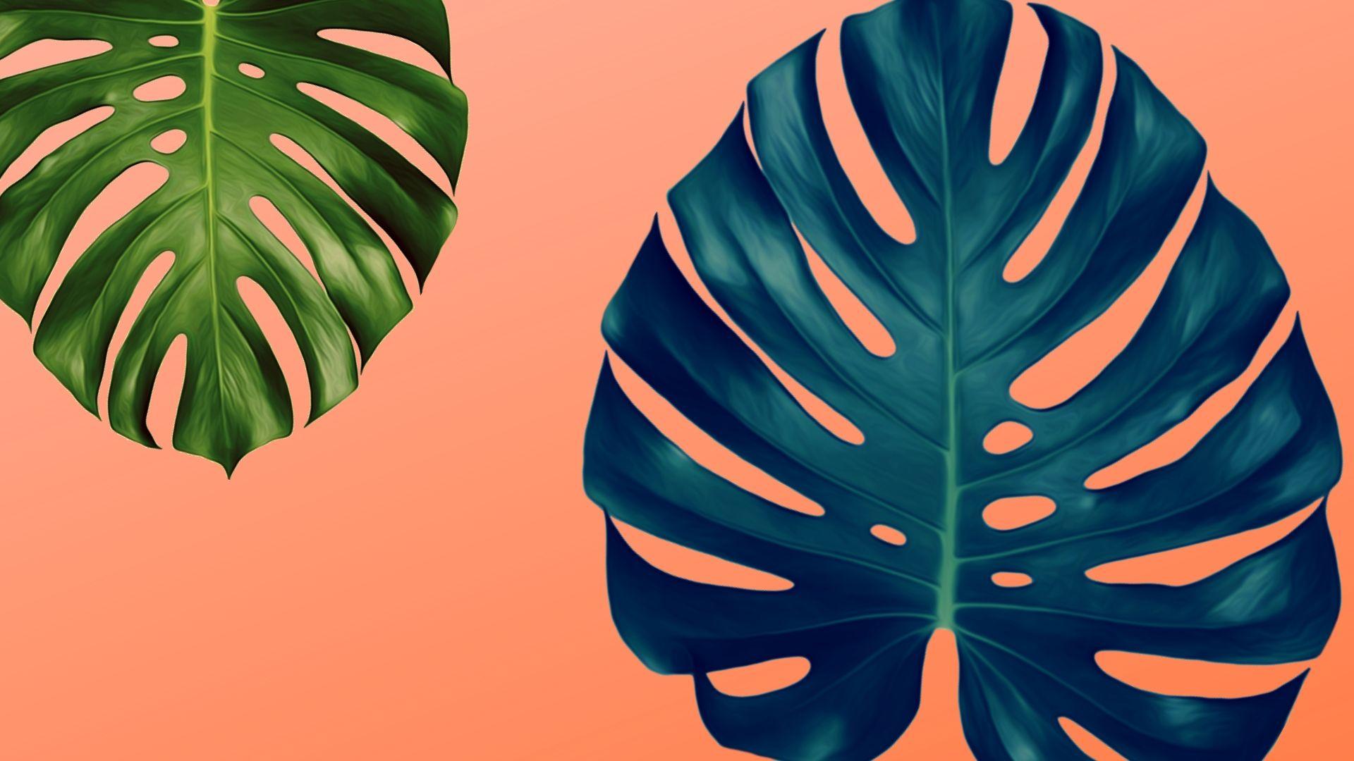 monstera-deliciosa-planta-mexicana-diseno-internacional