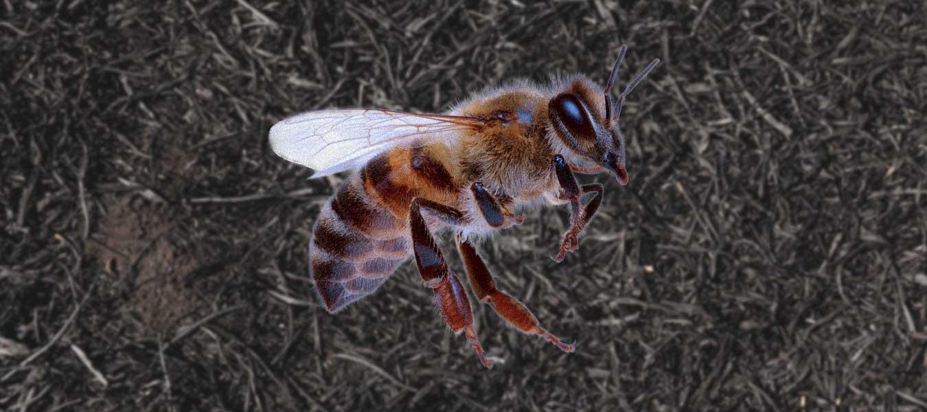abejas-mexico-extincion-mexicanas