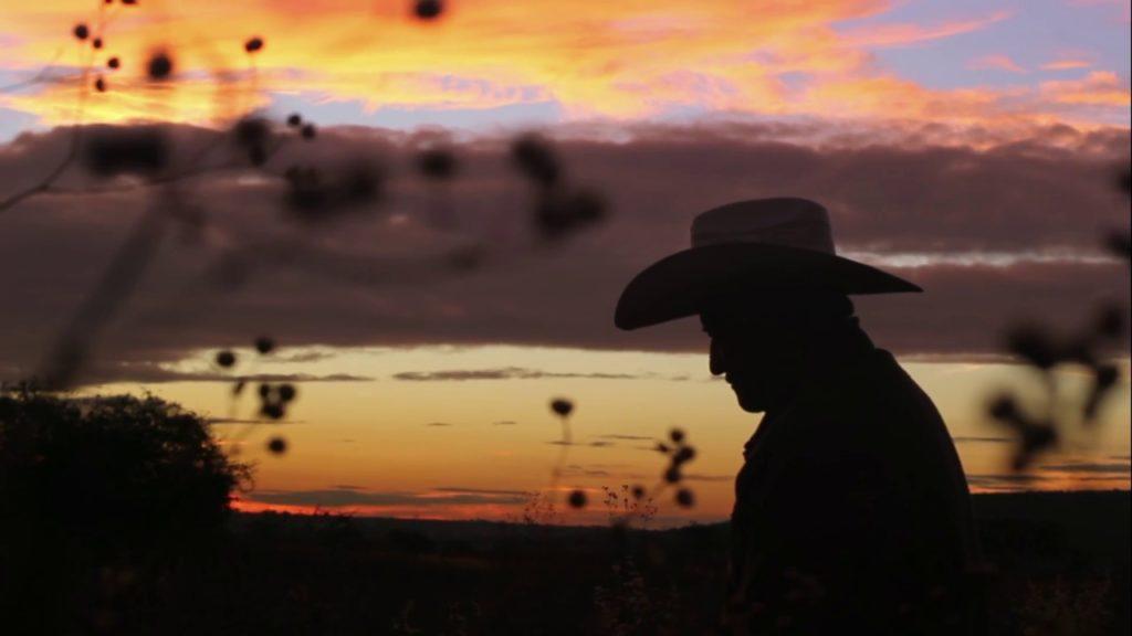 abejas-mexicanas-peligro-extincion-cultivos-plantas-ingredientes