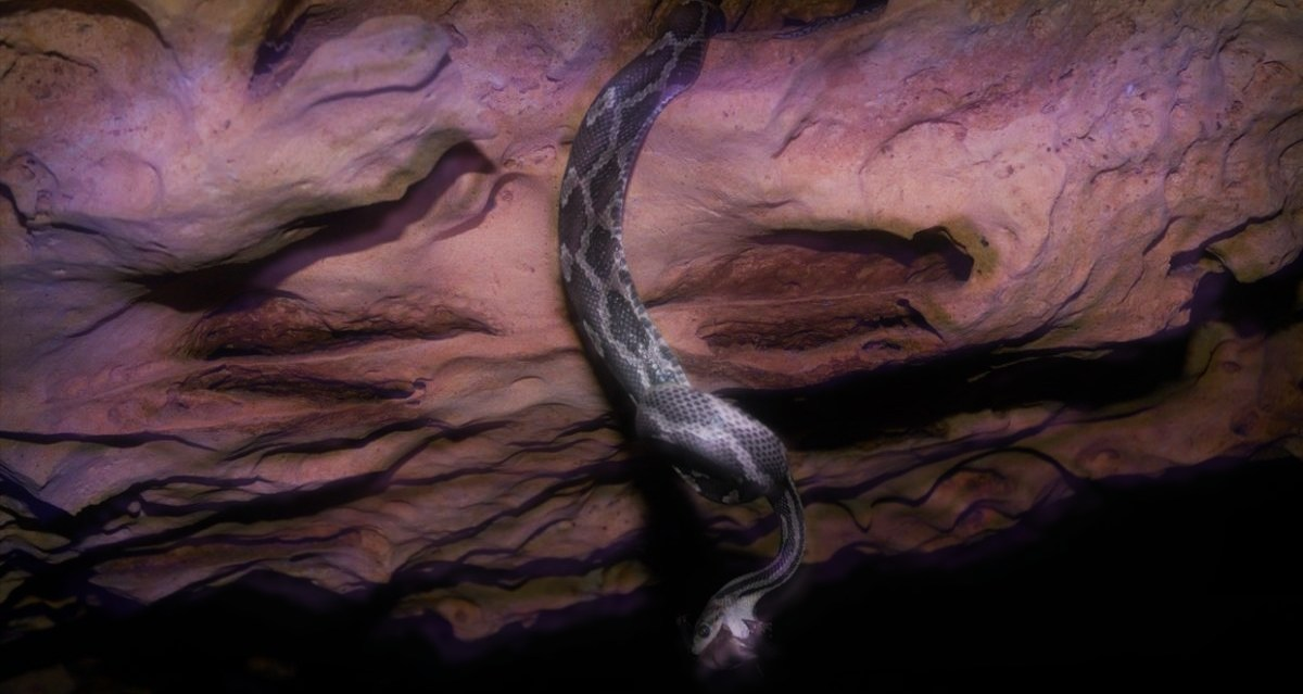 yucatan-cueva-serpientes-colgantes-visitar-viajar