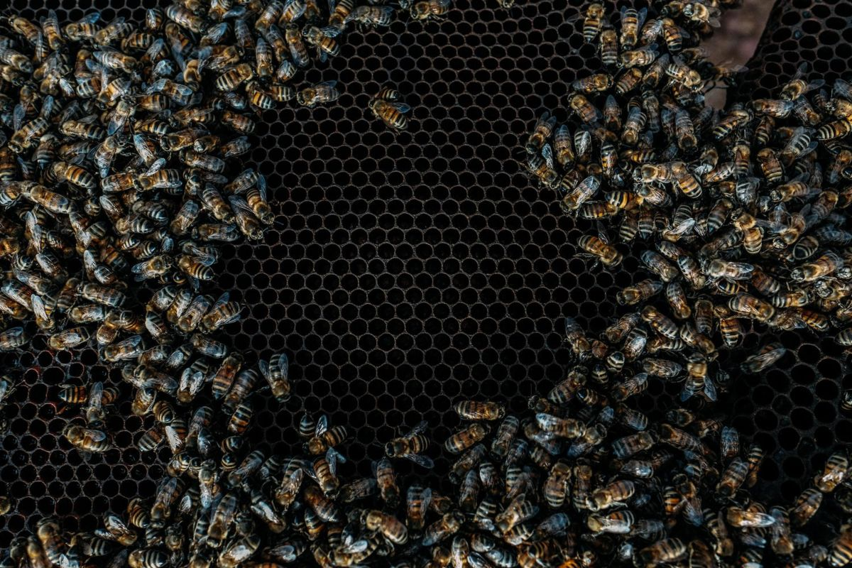 abejas-mexicanas-miel-polinizacion-crisis-ambiental-video