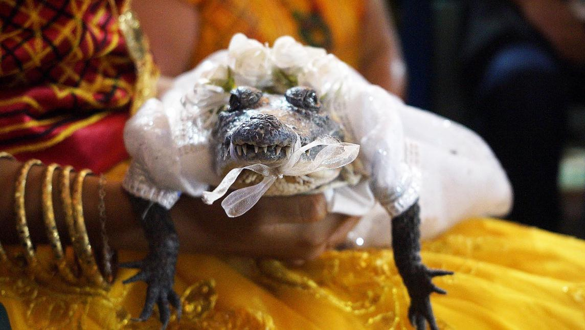 alcalde-oaxaca-oaxaqueno-casa-princesa-caiman-lagarto-codrilo-boda