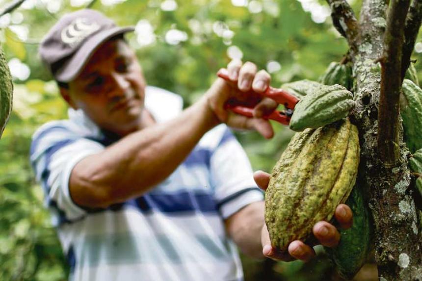 mexico-campo-campesinos-mexicanos-agricultores-bonito-tianguis