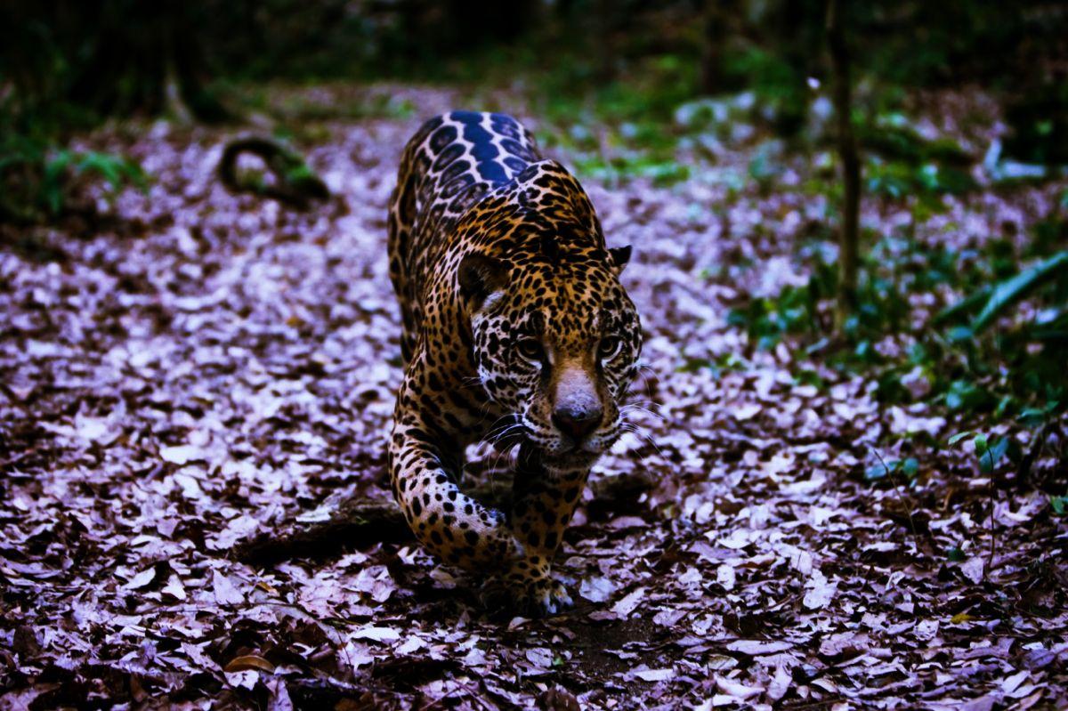 nina-activista-mexicana-rescate-jaguar-huasteca