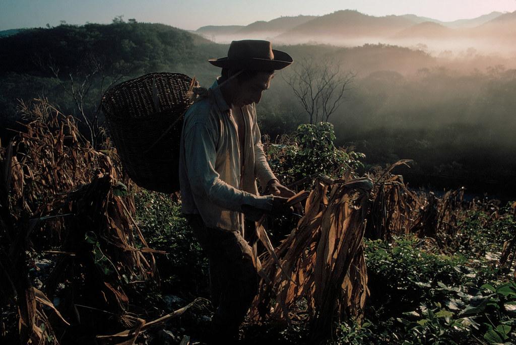 indigenas-mexico-pueblos-comunidades-imagenes