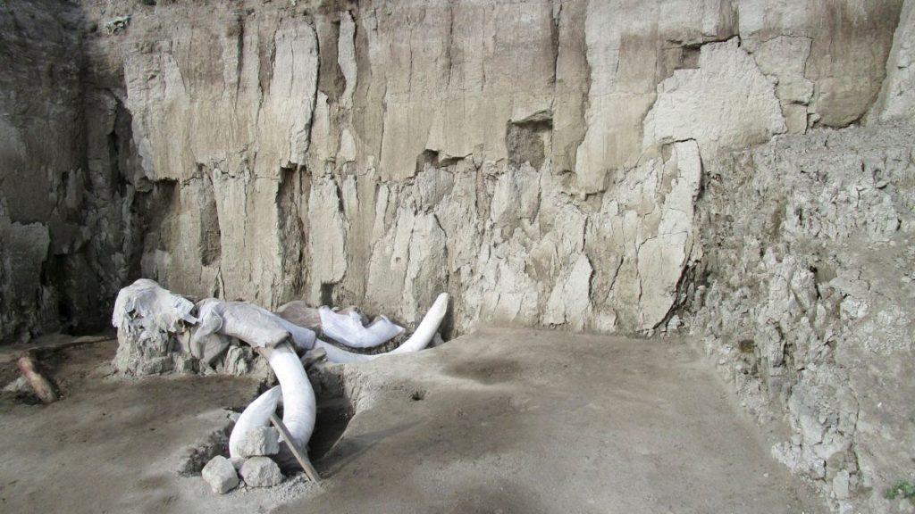 mega-sitio-mamuts-mexico-fosiles-descubrimiento