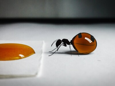 hormigas-mieleras-mexicanas-miel