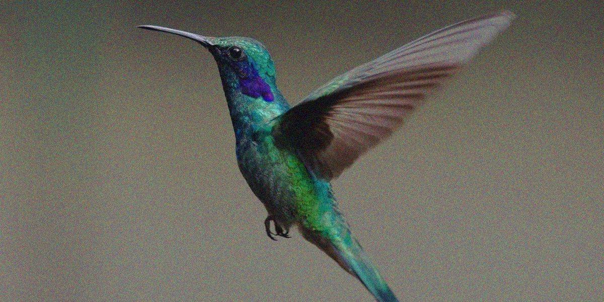 unam-jardines-colibries-colibri-cdmx-polinizadores