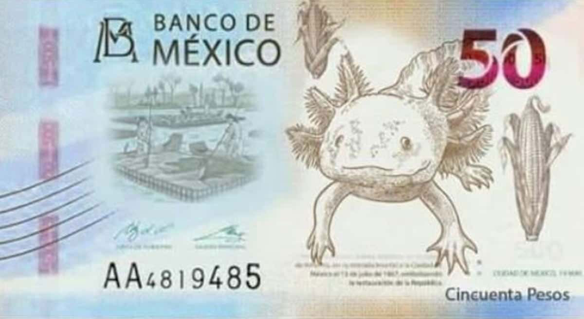 ajolote-billete-mexico-axolote