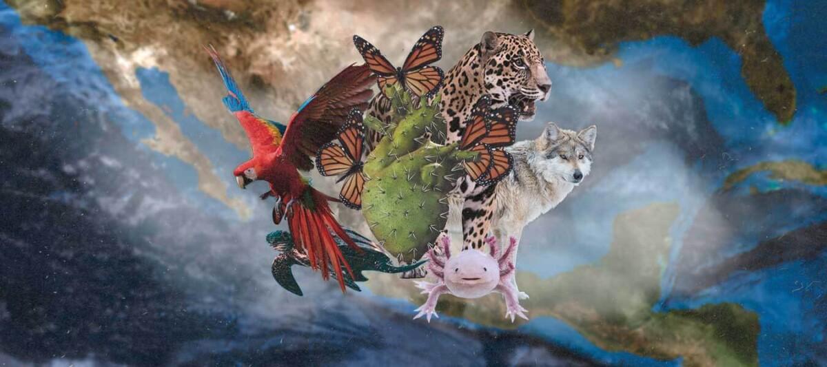 carteles conabio, naturaleza mexico, biodiversidad en mexico
