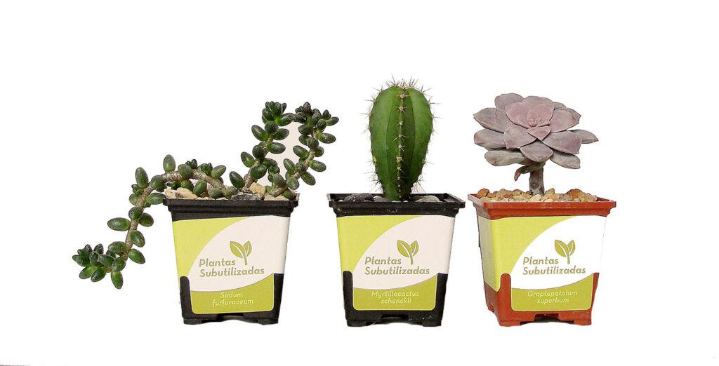 plantas-adopcion-mexico