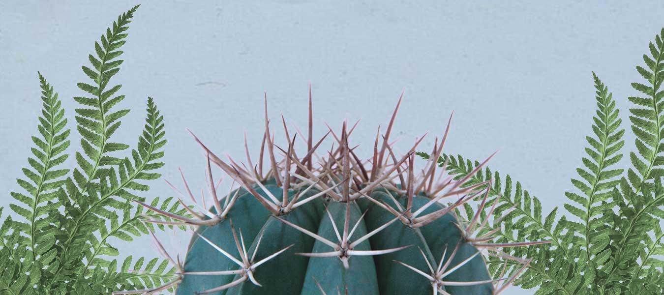 plantas-peligro-extincion-suculentas
