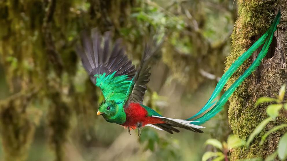 quetzal-ave-pajaro-mexico