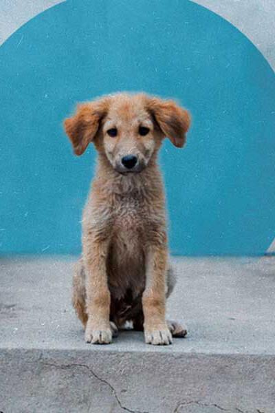 perros-adopcion-mexico-animales