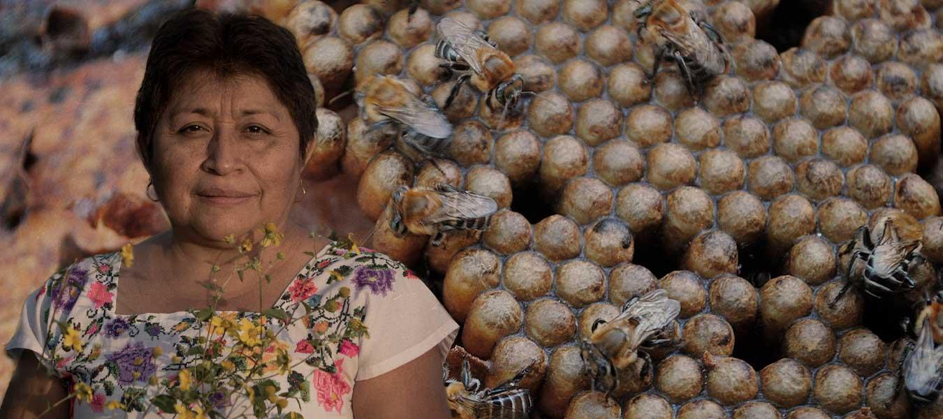 abejas, naturaleza, protección
