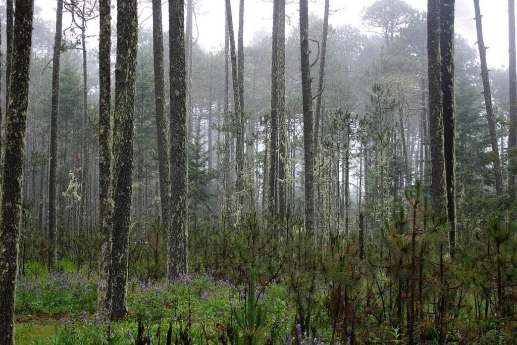 yasnaya-elena-reflexion-indigena-mexico-conquista-milpa-cambio-climatico-mixe-tierra