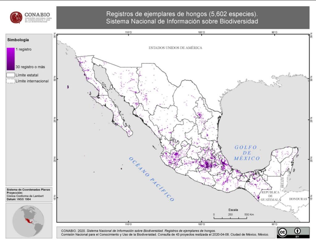 hongos-mexicanos-propiedades-alucinigenos-comestibles-extincion-diversidad-mapa