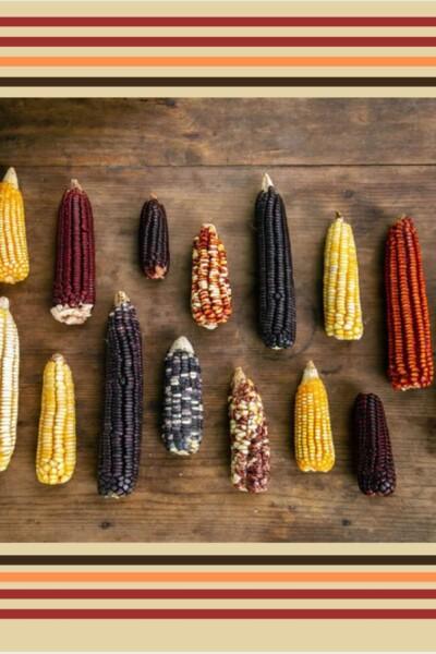 maiz-transgeico-prohibido-mexico-diversidad-importancia