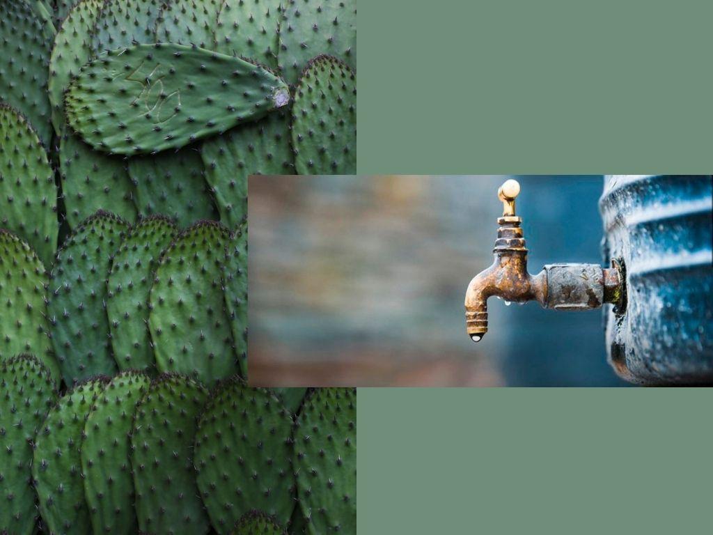 nopal-purificacion-agua-inventos-mexicanos