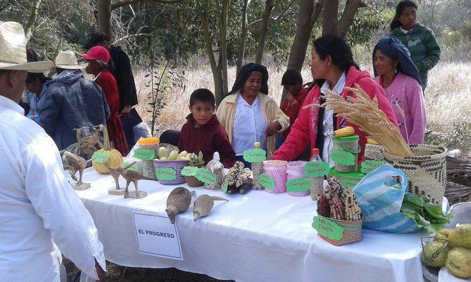 ninez-oaxaca-comunidades-importancia